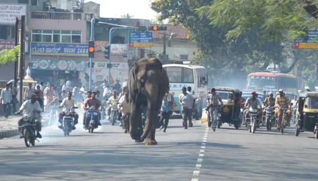 Elephants - 5000 years of Indian history